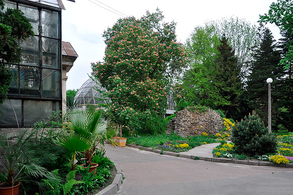 Ботанический сад имени фомина